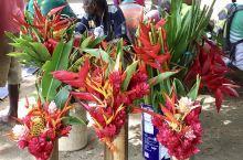 维拉港的中央蔬果市场