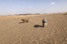 狗子在沙漠