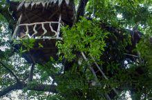 樱花谷温泉-原生态的泡汤、洗肺体验 【原生态、森林氧吧、经济实惠】 樱花谷温泉位于樱花谷景区之内,温