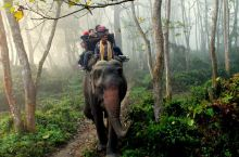 奇特旺的大象【尼泊尔】 奇特旺位于尼泊尔南部平原,河流在此形成冲积扇,滋养了肥沃的水土,从而衍生了一