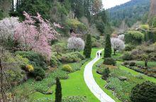 加拿大  维多利亚 布查特花园(The Butchart gardens是座家族花园。从1904 年