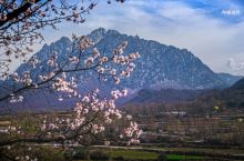 春到莲花山~