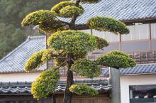 仙严园,又称矶庭园,是极具代表性的日本式庭院。 建于嘉永5年(1658),是当时萨摩藩主岛津齐彬的宅