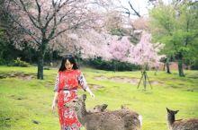 """一""""鹿""""有你 爱上奈良 第一次来日本正是樱花季,我们爱上了这座充满精灵的小镇奈良。奈良完全可以步行游"""