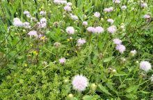家乡的花草,一望无际的麦田,成熟的油菜,是想要体验乡村生活的好去处,四五月份的天不冷不热,各种野花遍
