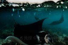 科莫多对初学者友好的顶级潜点-蝠鲼角、海龟城  很多世界顶级潜点都要求潜水者持有AOW及以上的潜水资