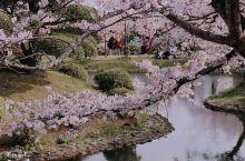 落樱缤纷的春季