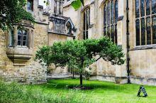 启发了牛顿的那颗苹果树~