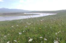 从玛曲去西麦朵合塘的路上,两侧草原繁花若星辰,虽然赶到西麦时大失所望,但沿途草原风光自觉不虚此行