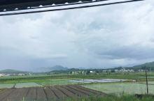 这里有一堆的稻田。
