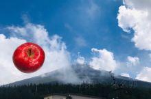 富士山下刚采摘下来售卖的苹果32元一个,新鲜的味道