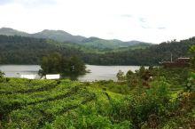 茶园环绕的宁静之地,Patenggang Lake  在国外第一次见到茶园是在万隆,而Patengg