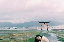 广岛旅行 | 日本国宝级景点严岛神社大鸟居 始建于593年的严岛神社不但是日本国宝级的地标 也被列于