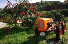 希腊克里特岛,蓝天碧海,空气清新。这里有希腊文明的源头,也有最古老的橄榄树,有美食,有美酒,是个度假