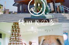 """看可爱的狗狗~""""日本东北大馆市""""  都知道在秋田有很受欢迎的秋田犬,在大馆市就可以近距离接触哈。 从"""