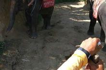 在泰国骑大象!