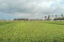 好美呀!这绿色田园