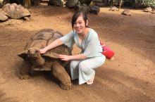 大爱毛里求斯!第一个是在毛里求斯的动物园,好多好多大大的乌龟,好可爱,不单单有乌龟,还有鳄鱼,第二个