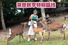 如果只有半天时间怎么玩奈良?当然既要拍到美美的喂鹿照,还要看看奈良的神社和风景~国庆出游,奈良公园、