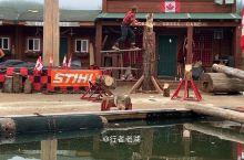 砍木头都能变成秀,游客们还要花钱才能看,看过后都说阿拉斯加伐木工很牛!