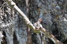 皮皮岛的猴子