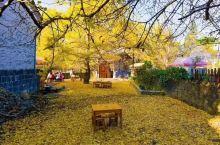秋叶落地,一片金色家园