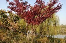 秋天的红叶真美