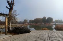 植物园,秋