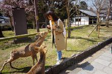 去过大阪三次 最爱的还是奈良公园 希望能赶上红叶再去一趟