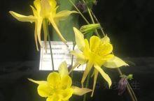 新西兰惠灵顿的花和植物展,成人三块纽币一张门票,参观的人送了一棵海棠苗,拿到手一看,眼泪快掉下来了。
