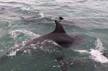 新西兰奥克兰的北岸大桥下,来了一群海豚。据说去年的这个时候还来过两头虎鲸。 别人家门口有小猫有小狗,