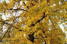 不得不感叹大自然的美,值得一去,又是一年黄叶季