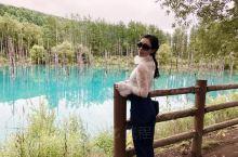 美瑛町白金青池,因被苹果公司选做官方壁纸而惊艳全世界的绝美景点[憧憬] 夏季在阳光的照耀下湖面闪烁着