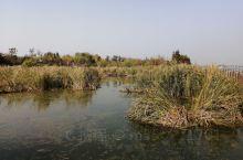 少海湿地公园