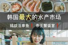 在韩国最大的水产市场挑战吃活章鱼 札嘎其市场是韩国最大的水产市场。一楼为开放式渔市场,共有超过300