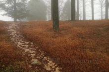 四明山国家森林公园位于浙江省东部四明山腹地的余姚,公园多低山丘陵,山峰起伏,林木茂密,花草芬芳,山崖
