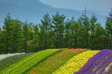 富田农场绝对是夏季北海道的最亮眼的地方。多彩的花田,迷人的薰衣草香,还有美味的冰淇淋和多样的高品质手