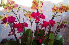 我的花开了 白山·吉林