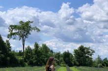 TERRE BLEU.CA农场据称是安大略省最大的薰衣草庄园。前往观赏,发现薰衣草似乎营养不良,开放