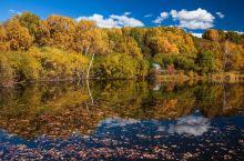 深藏在白桦林中的迷人小湖_
