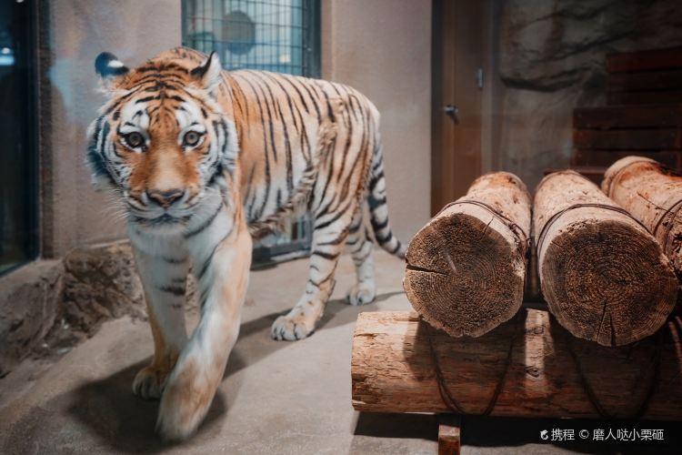 Sapporo Maruyama Zoo3