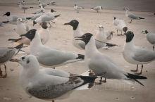 北飞的红嘴鸥又一次驻足乌海湖,与游人嬉戏。随着与人接触的频繁和人们环境意识的提高,人与红嘴鸥的关系也