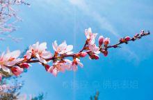故乡的春天  北方这个庚子年的春天,貌似比往年来的更早了一点,农历三月还没到,各色各样的花已经争艳枝