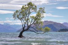 瓦纳卡孤独之树 还有最后一个景点要打卡,来瓦纳卡湖,怎么能不看看,孤独的树? 它就这么姿态优美地站在