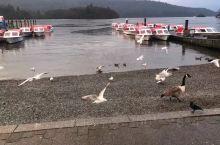 冬季的温德米尔湖略显沧桑,到达时已是下午三点,天空飘着濛濛的细雨,为清冷的湖面平添了几许萧瑟!沿着岸