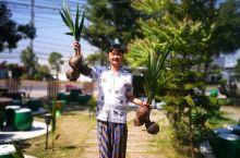 Coconut Damnoen Restaurant 可可那花园餐厅是当地(丹嫩沙朵)一家花园式泰国