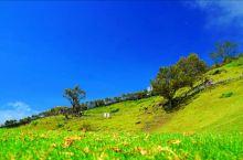 有小瑞士之稱的清境農場,海拔 1,748公尺,面積約 700公頃。是合歡山之旅必經之地,農場內的高山