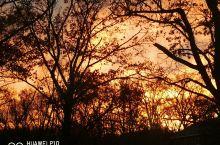初冬的布鲁克林傍晚和清晨静谧、绚烂。晚霞洒下一片金色,映衬着苍劲的树干。清晨的阳光斜照着红叶铺染的小