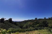 风景优美的咖啡主题庄园,第一家星巴克咖啡供应商,以咖啡文化为主题,没有住宿的专营咖啡的庄园!圣何塞众
