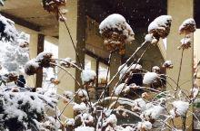 下雪天的ETSU